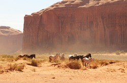 Wild horses running in a desert with a cowboy