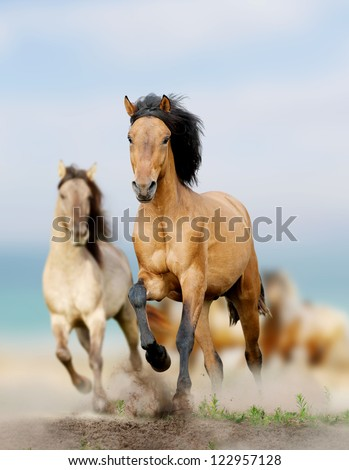 wild horses running in dust