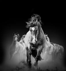 wild horses running in the dark in dust