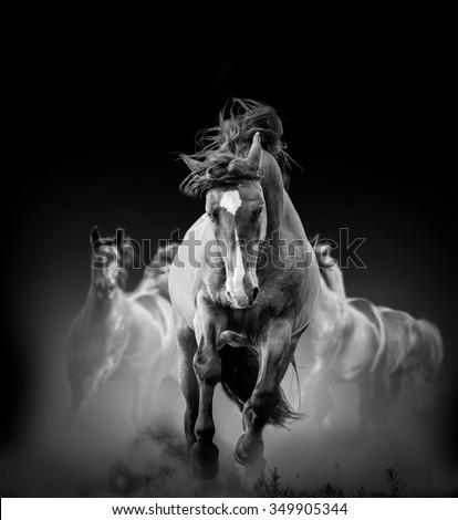 stock photo wild horses running in the dark in dust 349905344 - Каталог — Фотообои «Животные»