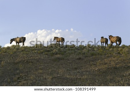 Wild horses walking at the Black Hills Wild Horse Sanctuary, South Dakota