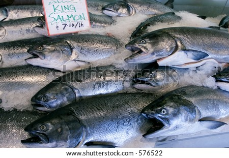 Wild King salmon in Seattle's pike place market - stock photo