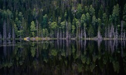 Wild lake shore with pine trees. Reflections on the surface of super clean water. Nothern landscape, Karelia