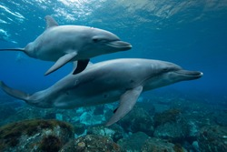 wild life dolphins underwater photography