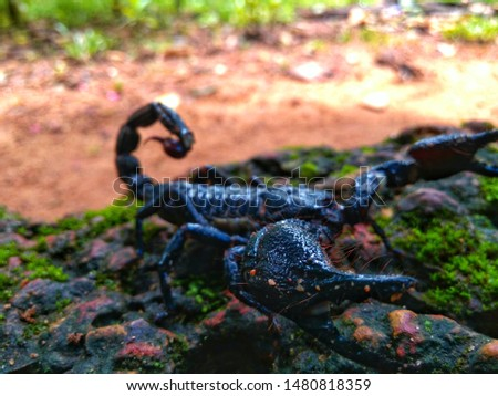 wild life is wild,a wild scorpion real deep blue color