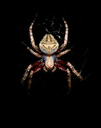 wild life photography with spider macro