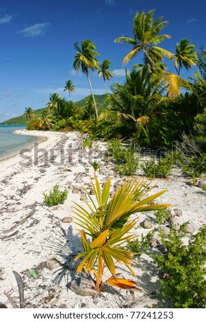 Wild lonely tropical beach on Maupiti, French Polynesia, Society Islands