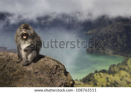 Wild Macaque Monkey on Mount Rinjani, Lombok