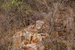 wild male leopard or panther resting on rock over hill during safari in indian forest - panthera pardus fusca