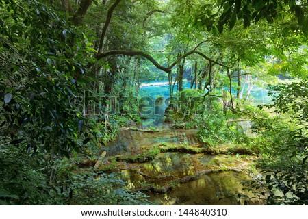 Wild Mayan