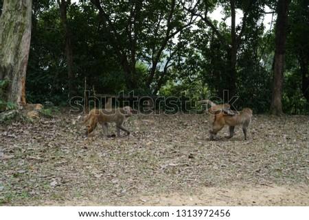 Wild Monkey Family, Monkey Baby  #1313972456