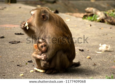 Wild monkeys in the jungle. Monkeys in the wild. Monkeys of the breed are Macaque. #1177409068