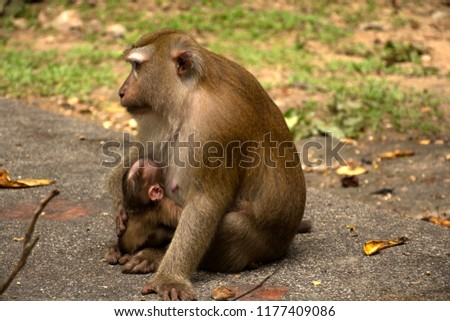 Wild monkeys in the jungle. Monkeys in the wild. Monkeys of the breed are Macaque. #1177409086