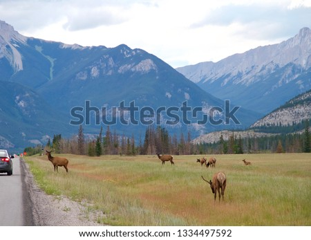 wild moose and deer grazing in front of mountains  #1334497592