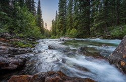 Wild mountain fly fishing river flowing through a dense, green, pine forest at sunset in eastern Oregon. Lostine River.