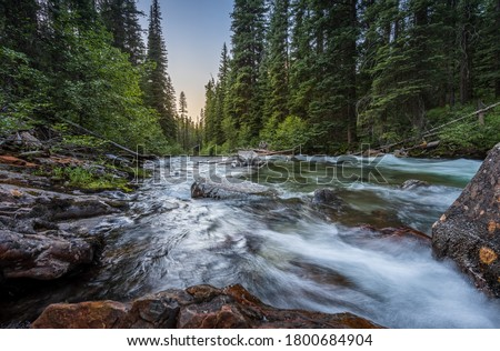 Wild mountain fly fishing river flowing through a dense, green, pine forest at sunset in eastern Oregon. Lostine River. Foto stock ©