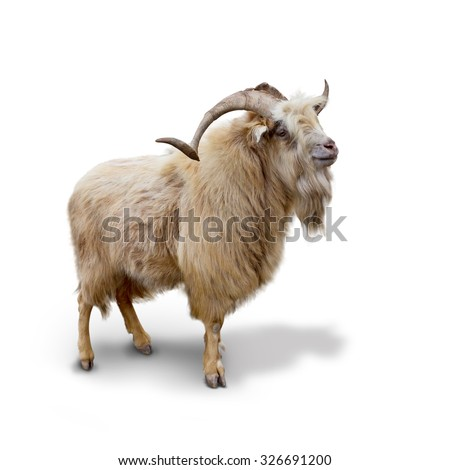 Wild mountain goat Isolated on the white background #326691200