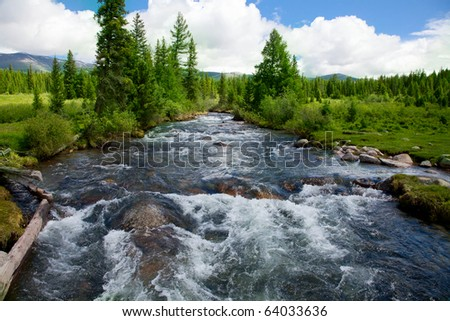 Wild mountain river flowing through the fir forest