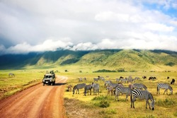 Wild nature of Africa. Zebras against mountains and clouds.  Safari in Ngorongoro Crater National park. Tanzania.