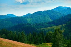 wild nature, summer landscape in carpathian mountains, wildflowers and meadow, spruces on hills, beautiful cloudy sky