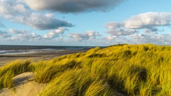 Wild North Sea coastal seascape with wide sandy coastline and tall marram grass(Ammophila arenaria) leaning and blown with a strong onshore wind and dramatic cloudy blue sky on Vlieland island