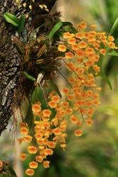 wild orchid on summer