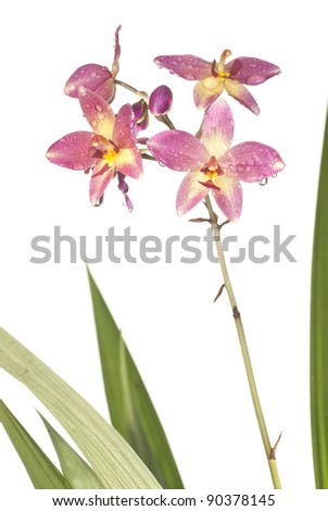 Wild Orchids. Unsharpened file