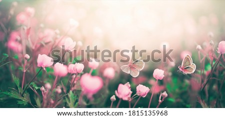 Wild pink flowers bathed in sunlight in field and two fluttering butterfly on nature outdoors, soft selective focus, close-up macro. Magic artistic image. Photo stock ©