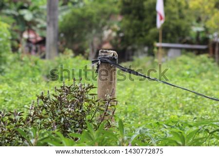 wild plant at my garden #1430772875