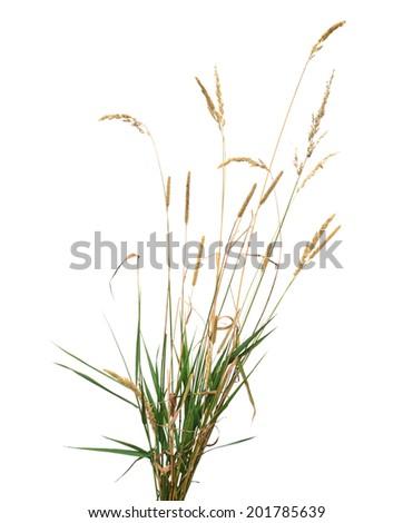 Wild plant, wheat isolated on white background #201785639