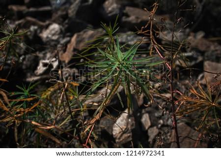 Wild plants. Plants background. Plants and stones.  #1214972341
