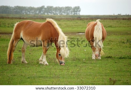 stock photo wild pregnant mare haflinger horses are used as natural lawn mowers to shorten the vegetation in a 33072310 Torso   Mystery of the body   B&W Art photography. artistic nude ...