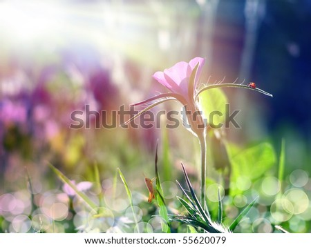 wild purple flower under the sun beam