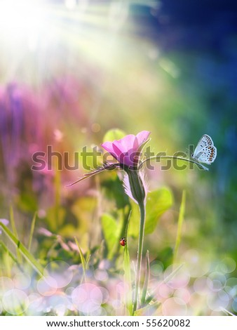 wild purple flower under the sun beam