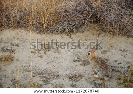 wild rabbit wild nature of the USA #1172078740