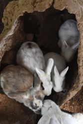 Wild rabbits all in a hollowed out log.