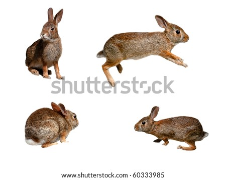 Wild rabbits collage on pure white background - stock photo