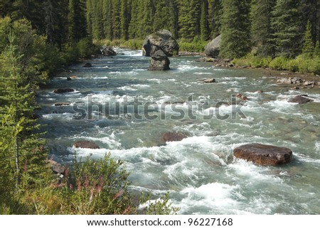 Wild river in forest