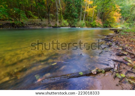 Wild river in forest. Autumnal landscape.