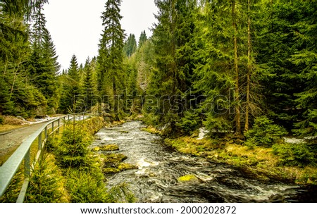 Wild river in the forest. River in forest. Forest river stream view. Forest stream landscape