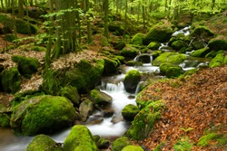 Wild river near the Gertelbach Waterfalls in the Black Forest