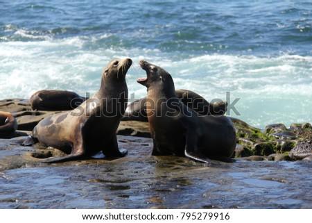 Wild seals on La Jolla cove in San Diego.