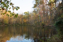 Wild secluded inlet of lake along trail Seneca state Park Maryland United States in Fall