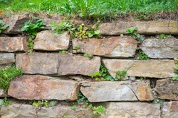 Wild shamrock and rockery plant growing in joints of an old stone wall. Planting in retaining walls. Gardening in a dry-stone wall