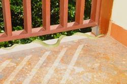 Wild snake slithering on hotel balcony in Vietnam