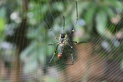 wild spider  build a spider nets