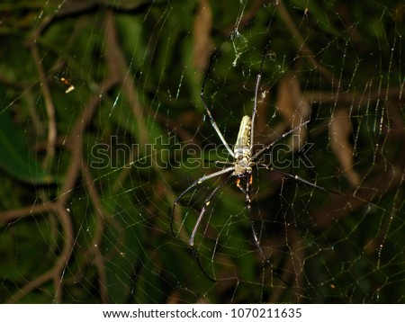 Wild spider with yellow stripe on the spider webs #1070211635