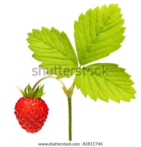 Wild strawberry  macro isolated on white