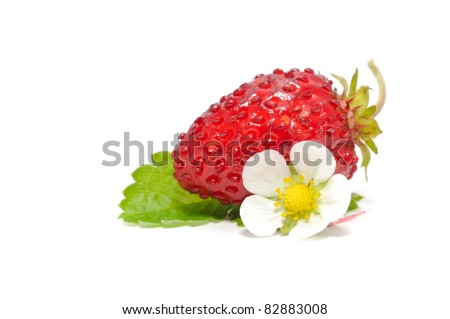 Wild Strawberry with Flower and Leaf Isolated on White Background
