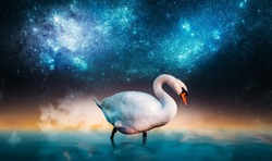 Wild swan stand in the water at the night. Stars and galaxies on the background. Elements of this image furnished by NASA.